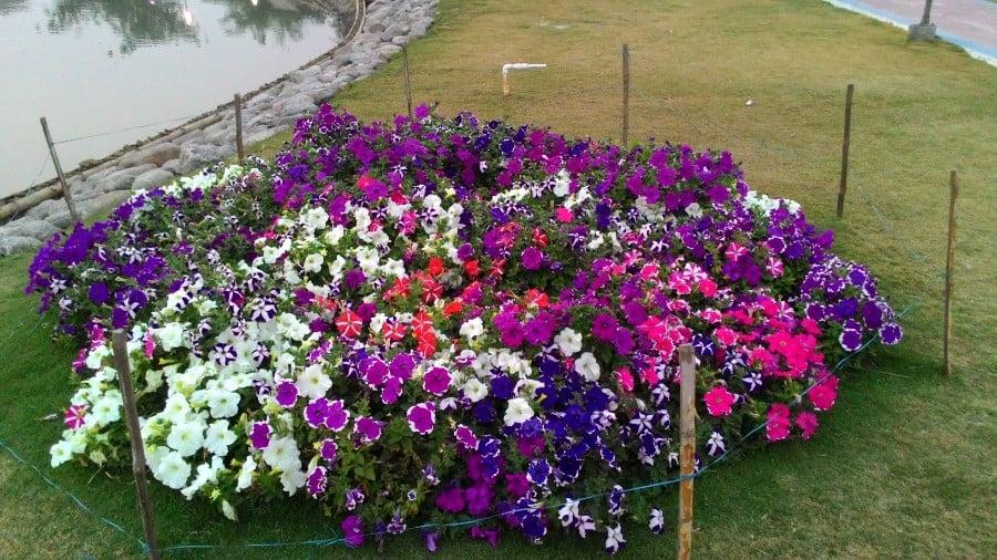 flowers in ecopark